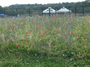wildflowers at Slades Farm